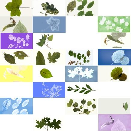 feuilles1